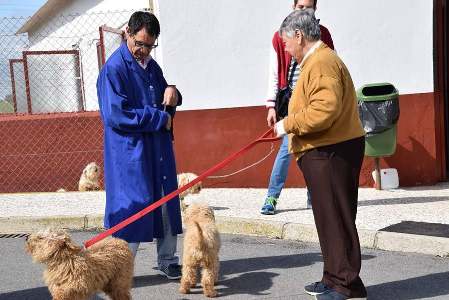 Terapia con mascotas en PRODE