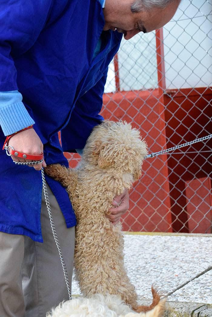 Terapia con mascotas y discapacidad intelectual