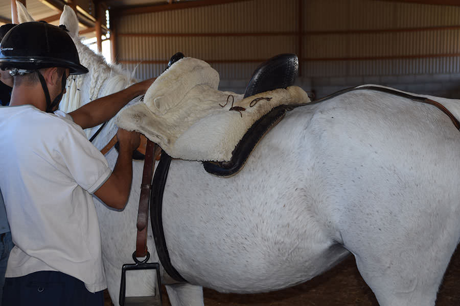 Trabajando con los caballos